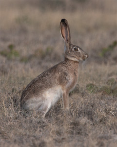 Jackrabbit_20130630_5754_Curves